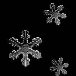 JofiaDevoe-snowflakes-white-sh.th.png