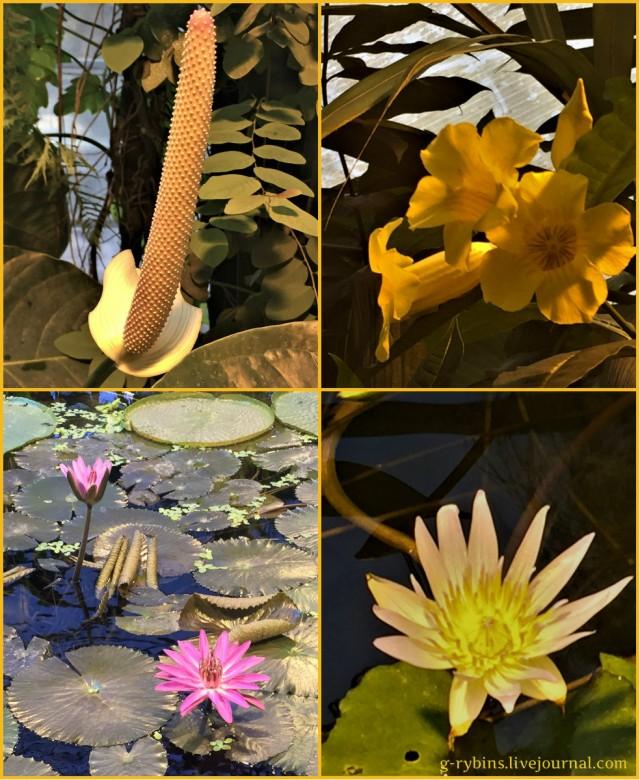 collage1722.jpg