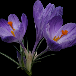 Carena_Sweet-Love-of-Spring_1.th.png