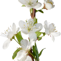 Carena_Sweet-Love-of-Spring_20.th.png