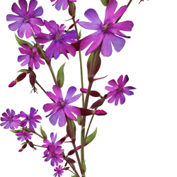 Carena_Sweet-Love-of-Spring_42.th.png