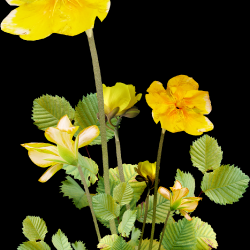 Carena_Sweet-Love-of-Spring_45.th.png